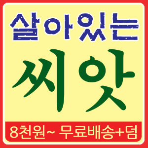 씨앗 모음 (8천무배) 가을 김장 배추 무 김장무 갓 파