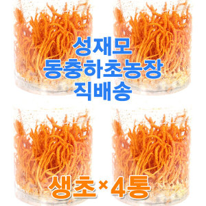 (공식판매처) 성재모 현미 동충하초 생초 4개/무농약