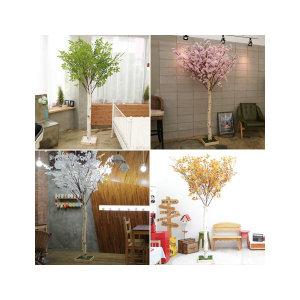 잎교체형 자작나무/벚꽃나무/단풍나무/느티나무