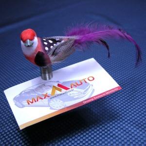 카맥스 삼족오 앵무새 메모클립 1P(색상랜덤발송)
