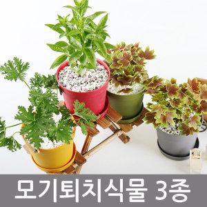 모기퇴치식물 1+1+1구문초/야래향/벤쿠버/벌레잡이