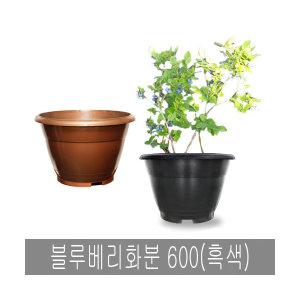 화분백화점 도로화분 블루베리화분 600(흑색 화분용)