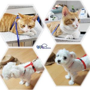 고양이 산책 목줄 가슴줄 리드줄 애견용품 몸줄