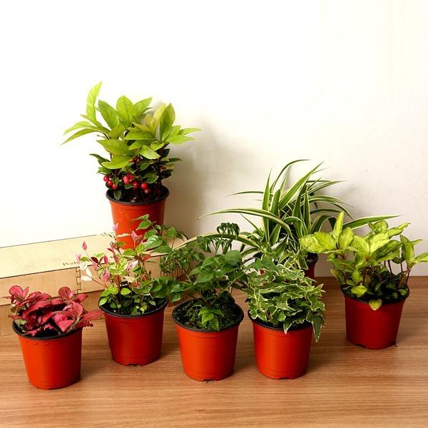 아침향기 공기정화식물 82종 초특가할인 관엽식물화분