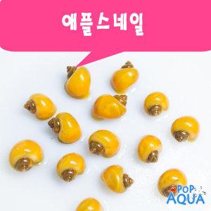 애플스네일 6마리/노란달팽이/수족관달팽이/열대어
