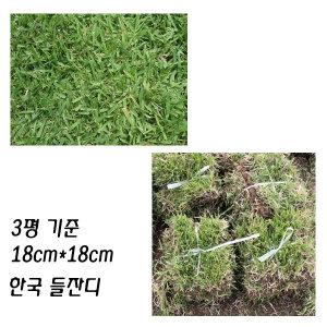 한국잔디 3평 중지 18cm 300개 들잔디 잔디