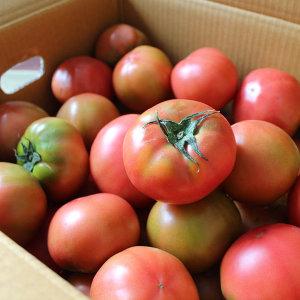 싱싱한 제철 토마토 4.5kg