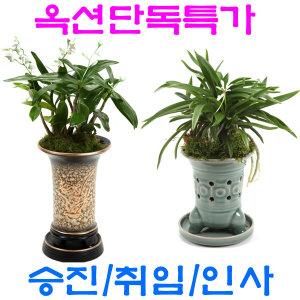 옥션단독특가 동양난 최저가 꽃배달 승진 취임 동양란