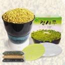 청시루 콩나물재배기 땅콩재배기 공장직영 콩200g증정