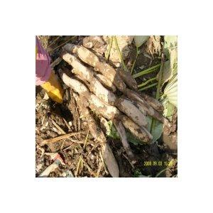 산지직송/햇연근판매/부부가운영/연근3kg/하품연근5kg