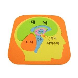 두뇌퍼즐/뇌구조 체험학 학습키트 초등학교
