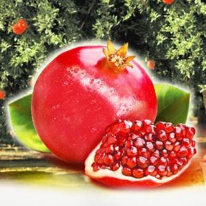 석류 1박스(7-13과)/냉동석류3kg 석류즙21포 선택