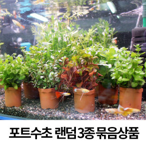 포트 수초 랜덤 3종 묶음상품/포트수초/수초/어항수초