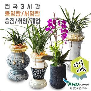 전국당일 꽃배달 동양란/서양란/난/승진선물/개업화분