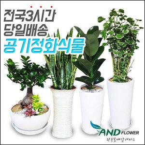 전국꽃배달 공기정화식물 /개업/관엽식물/화분배달