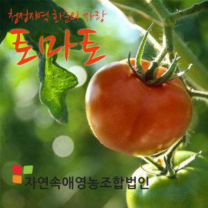자연속애 /산지직송 /정품4번 토마토5kg