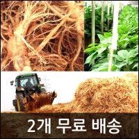 2개무료배송/인삼/수삼/난발삼/건강/홍삼/삼계탕/오쿠