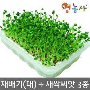 새싹재배기(대)+ 새싹 씨앗 3종 (브로콜리 무순 보리)