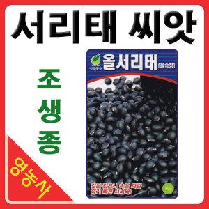 올서리태콩 씨앗 50g 조중생종 콩씨앗 콩씨 서리태콩