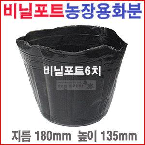 비닐포트6치(500개)칼라/육묘/농장/블루베리/모종화분