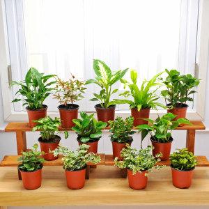 공기정화식물 포트식물 47종 택1