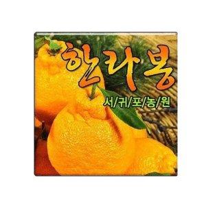 서귀포농원 싱싱한 한라봉 천혜향 레드향 5kg