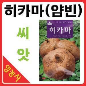 히카마씨앗/ 50립 얌빈 멕시코감자 씨앗 히까마 종자
