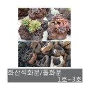 생활백화점 화산석화분 돌화분 돌분 화분 화산석 01