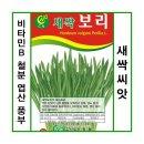 생활백화점 새싹 채소 씨앗 꽃씨앗 모종 새싹보리500g