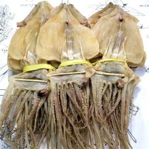 동해안  건오징어 파품 500그램부터 10마리