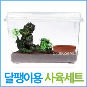 애완달팽이 사육세트 /집 상자 톱밥 대왕 백와 기르기
