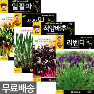 딱3일간무료배송 새싹채소씨앗 꽃씨허브씨앗 채소씨앗