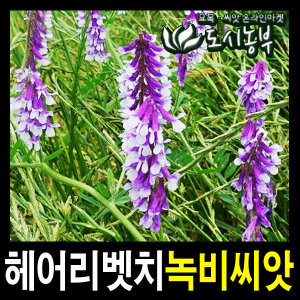 헤어리벳치씨앗/1kg/녹비씨앗/녹비종자/도시농부