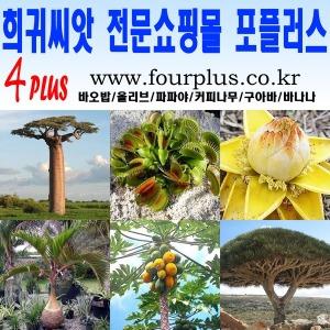 씨앗/바오밥나무/올리브/파파야/커피/바나나/구아바