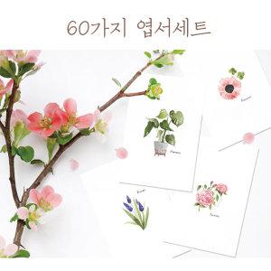 식물엽서/수채화엽서/뒷면무지/엽서/60종/FW03