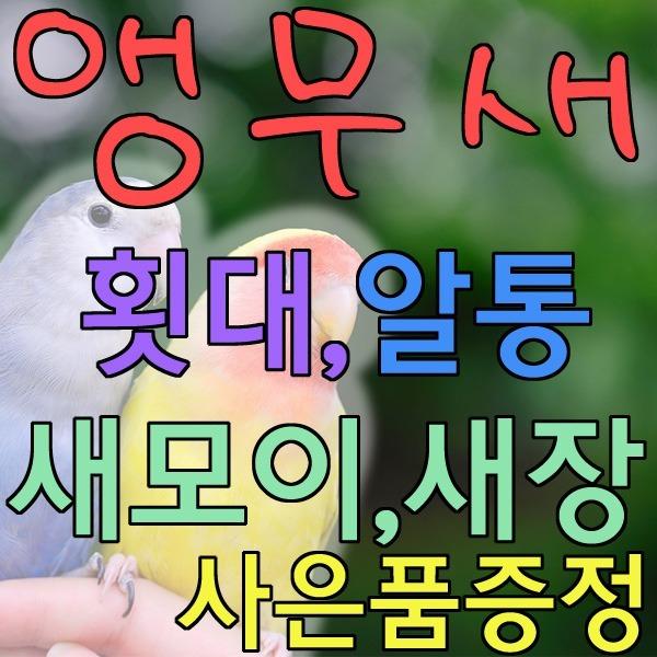 새모이 사료 앵무새 해바라기씨 잉꼬 모란앵무 용품