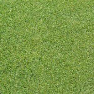 크리핑 벤트그라스 1kg 잔디씨 잔디씨앗