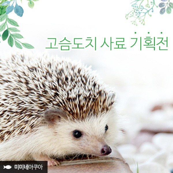 BIG/고슴도치사료/고슴도치용품/고슴도치먹이/도치밥