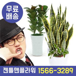 개업화분 기획전ONE 공기정화식물 관엽식물 동서양란