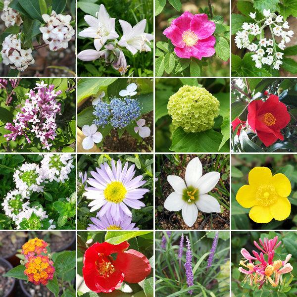 예쁜꽃1+1/화분/모종/묘목/봄꽃/식물/야생화