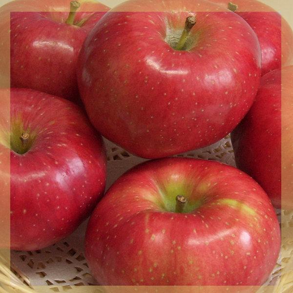 사과 10kg /마른 흠집사과 쥬스용 사과