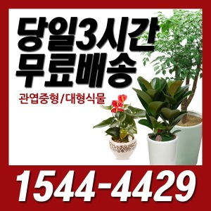 디씨플라워 죽전역 꽃배달 관엽/정화/개업화분