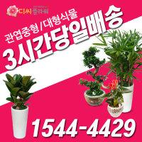 디씨플라워 오산역 꽃배달 관엽/개업/이전/화분