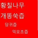 황칠나무진액/황칠나무즙/개똥쑥즙/당귀즙/익모초즙