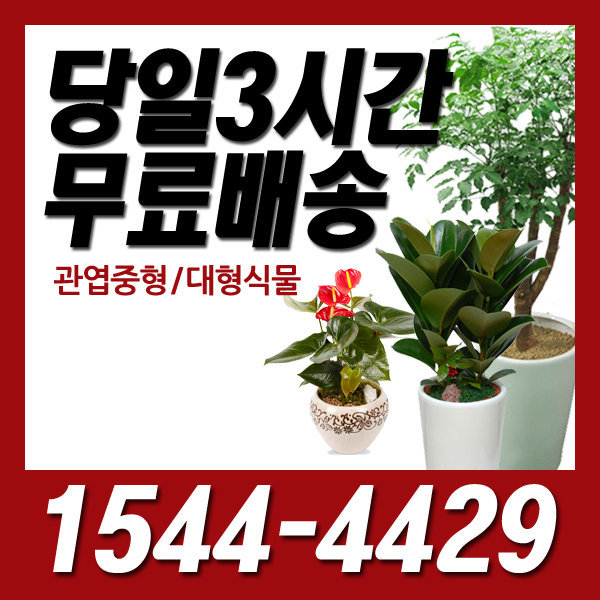 디씨플라워 금호역 꽃배달관엽/개업/정화/화분/오픈
